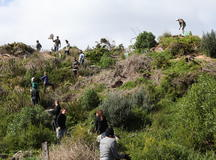 Quiksilver - Torquay Landcare Revegetation Projects